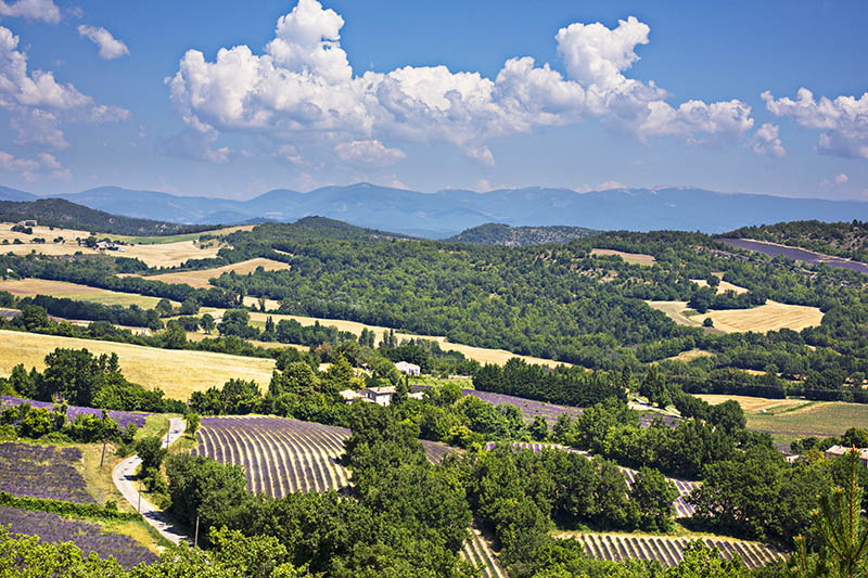 Panorama of the provence countryside.