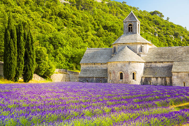 Field of lavender in front of Senanque Abbey in Provence, France.