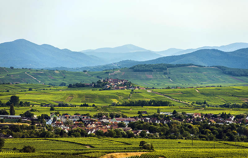 Village in the vineyards, Ribeauville and the Grand Ballon behind, Alsace, France, Europe