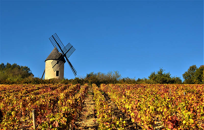 This beautiful autumn day proved a sky to die for thus providing the perfect back drop to this old windmill. The vine yard now lying idle after the seasons harvest having been picked, In France the grape picking is call the Vandages. I've done several times and it's a real life experience!