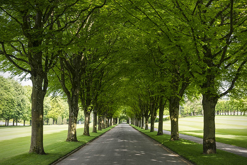 A tree-lined lane inside the Meuse-Argonne American Cemetery and Memorial, located east of the village of Romagne-sous-Montfaucon in Meuse (not far from Verdun), France. The cemetery contains the largest number of American military dead in Europe (14,246), all of whom died in 1918 during World War I.