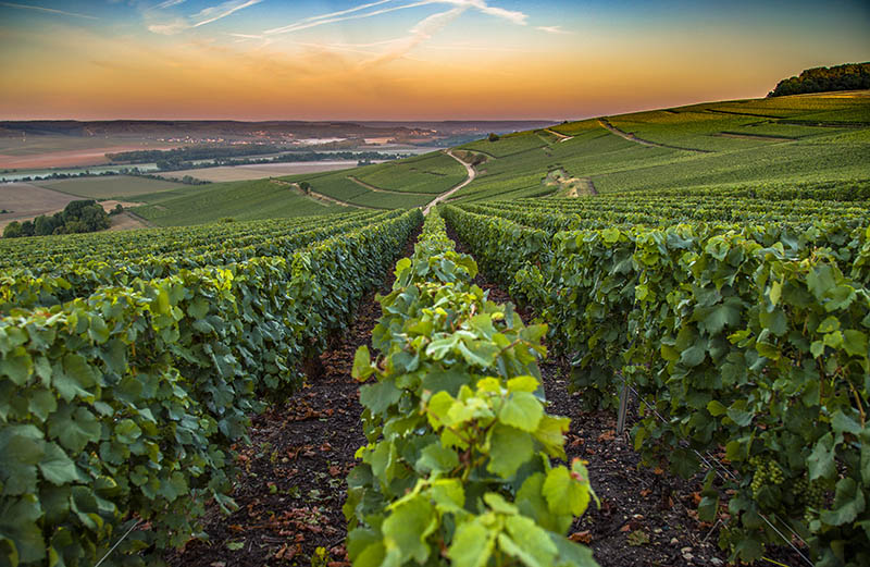 Champagne region in France. A beautiful view during the sunrise.