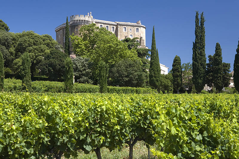A vineyard in front of the castle Chateau Suze_la_Rousse, Drome, Provence, France
