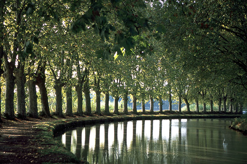 France, Languedoc-Roussillon, Herault, Capestang, Canal du Midi, Tree lined canal