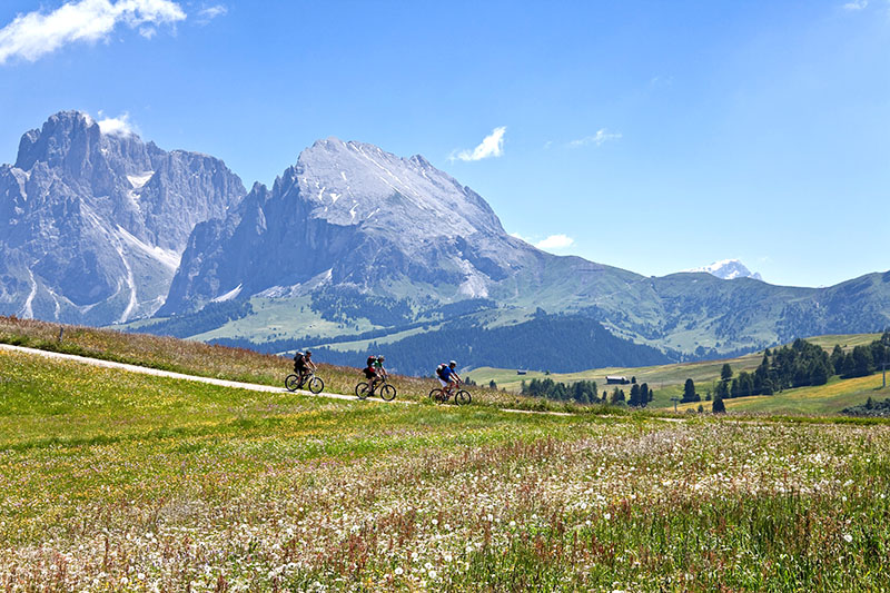Three male mountainbiker on a short downhill passage at Alpe di Siusi (ger.: Seiser Alm). This area is the largest high altitude (between 1.680 mt